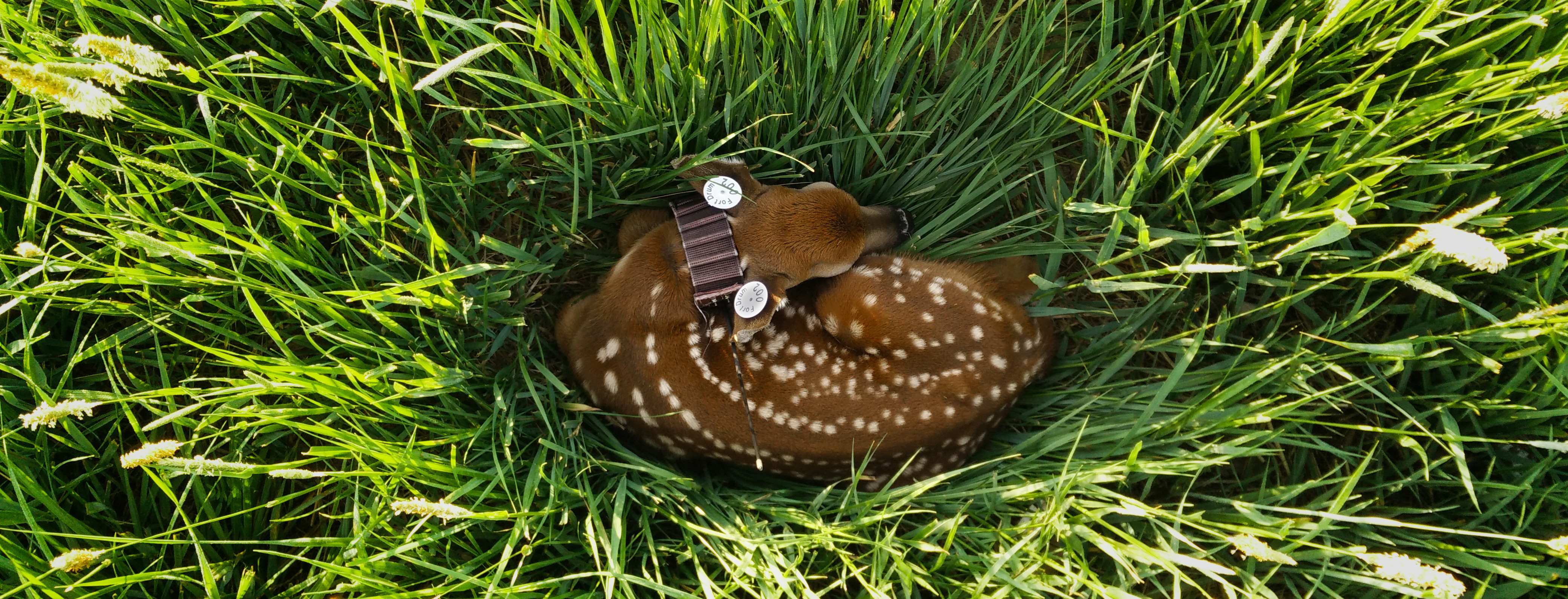 Fawn 002 from Summer 2015